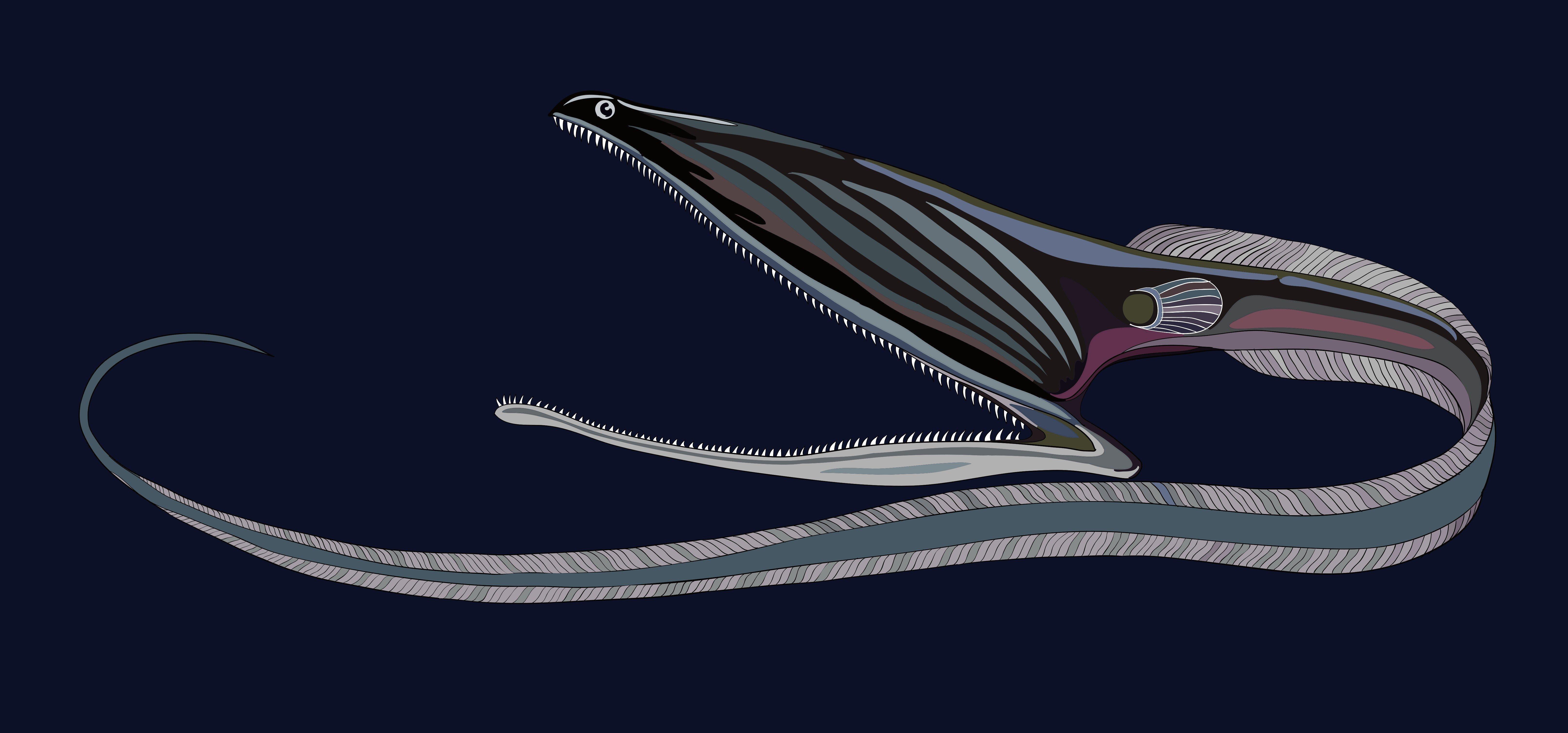 Eurypharynx pelecanoides
