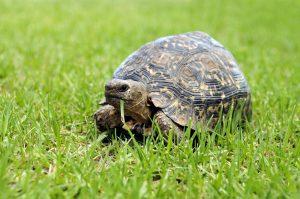 Ratgeber für Schildkrötenhalter