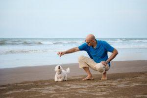 mann spielt mit malteser am strand