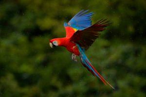 Papagei als Haustier