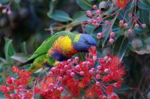 Papagei frisst Beeren