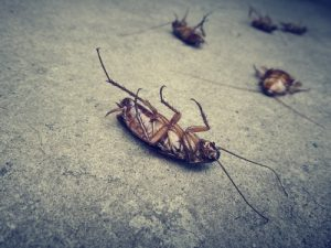Tote Schaben / Kakerlaken