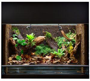 glasterrarium mit pflanzen und holzdekoration