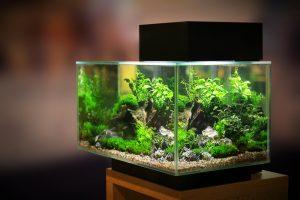 aquarium test, aquarium glas, aquarium kunststoff