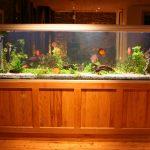 aquarium test, aquarium schrank