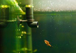 aquarium test, aquarium zubehoer, aquarium filteranlage