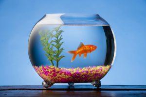 aquarium test, aquarium fische, goldfischglas
