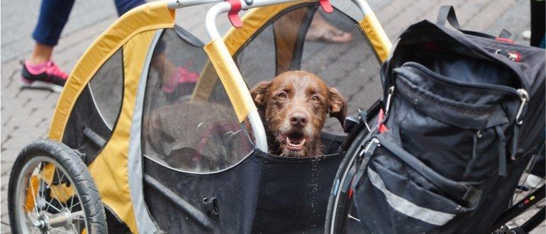 hundeanhaenger test, anhaenger hund