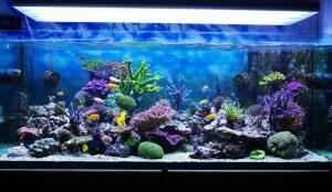 aquarium test, salzwasser aquarium