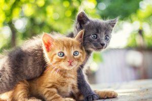 Katzen können stubenrein trainiert werden