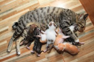 katzenbabys-kaufen-ratgeber