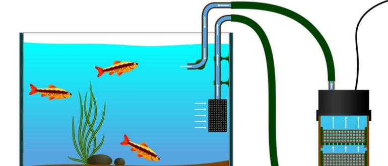 außenfilter test, aquarium außenfilter