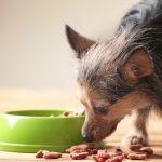 Tiernahrungs-Ergänzung
