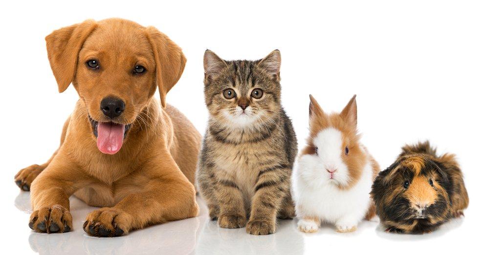 hund, katze, hase und meerschwein