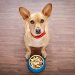 Test Hunde Ergänzungsfutter