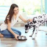hunde-ergaenzungsfutter-vergleich