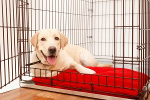 hundeboxen test, hundetransportbox