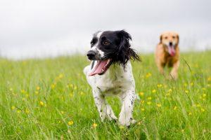 Hundefutter als Energielieferant