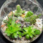 nano terrarium