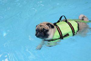 hundeschwimmwesten test, hundeschwimmweste, schwimmweste hund