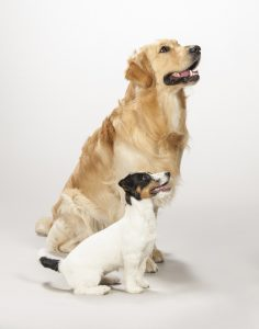 hundeanhaenger-test, hundefahrradanhaenger-test