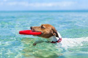 Schwimmwesten für Hunde-Test