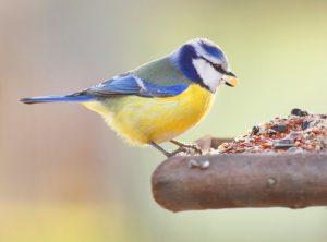 vogelhaus test, vogelhaeuser, vogelfutter