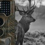 wildkamera test, wildkamera kaufen, wildkamera schwarzlicht