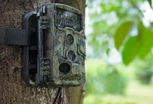 wildkamera test, wildkamera tarnung, wildkamera anbringen