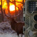 wildkamera test, wildkamera weißlicht, wildkamera kaufen