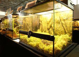 terrarien test, terrarium zoohandlung