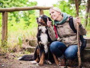 Wandern mit Berner Sennenhunden