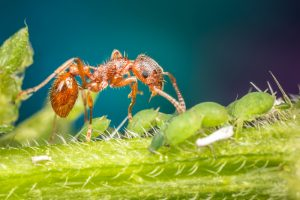 Ameisen Bekämpfen Natur Verstehen Und Richtig Handeln