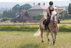 Haflinger als Reitpferd und Reiterin mit Zubehör zum Reiten