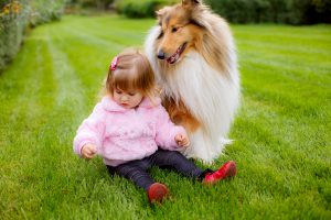 Langhaarcollie lieb mit Kindern Fimilie
