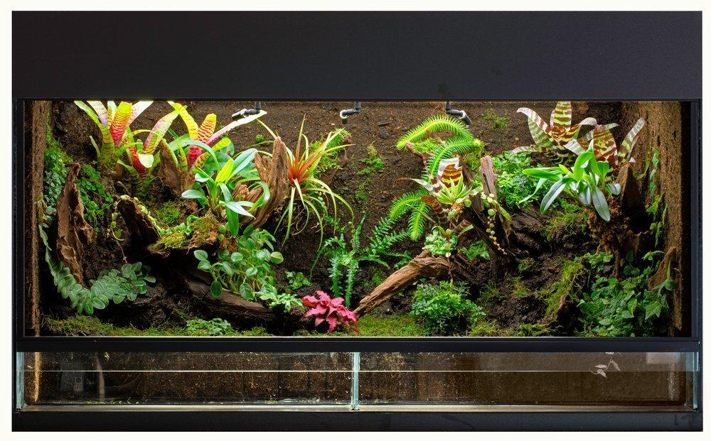 tropisches, großes terrarium