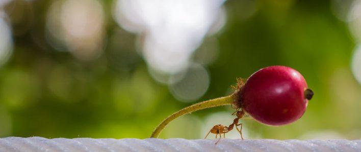 Ameise Nahrung