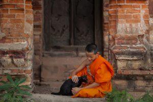 burma katze mit thailändischem mönch