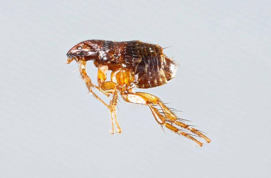 insekten fotos bilder und informationen ber exotische und heimische insekten. Black Bedroom Furniture Sets. Home Design Ideas