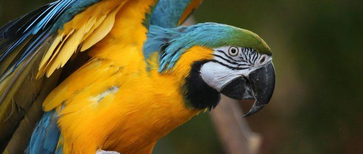 Der Papagei Erfahren Sie Alles über Den Prachtvogel Das