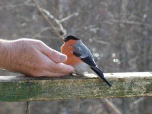 Vögel füttern aus der Hand
