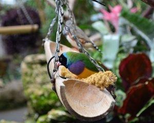 Amadine: Der Singvogel auf einer Holzschale