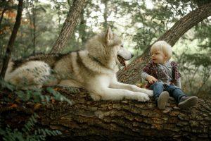 flauschiger grosser hund kind tipps