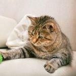 einfaches Katzenspielzeug