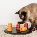 katzenspielzeug intelligenz