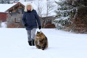 Riesige Norweger Katze mit Besitzerin im Schnee