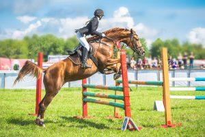 oldenburger pferde beim springen während der stutenprüfung des springpferdezuchtverbands