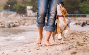 Hund gehorcht Herrchen im Urlaub am Strand