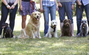 Hundetrainer Hundeführerschein Hundeerziehung