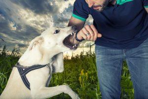 Hund beißt aggressiv
